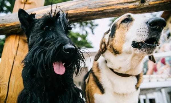 Избавиться от домашних животных